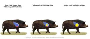 1.5MOA accuracy on feral pig.