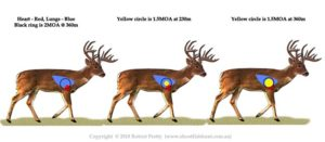 1.5MOA accuracy on whitetailed deer; shoot fish hunt.